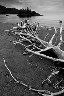 Driftwood Beach by Randall Nyhof