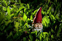Garden Gnome No.47 by Randall Nyhof