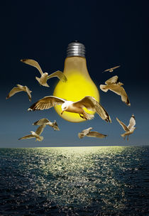 Gulls buzzing the light bulb by Randall Nyhof