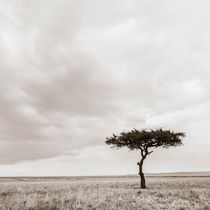 Lonely Tree with Vultures, Masai Mara, Kenya by Regina Müller