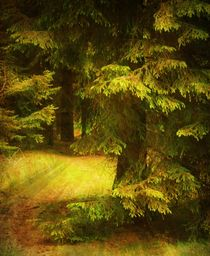 Heart of the Forest. von Heather Goodwin