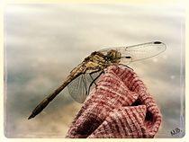 Libelle im Sommer by Shiva B.