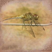Libelle im Sommer von Shiva B.