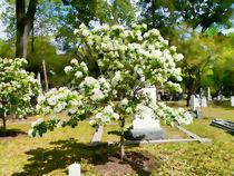 Tree in Glenwood Cemetery by sherrys-camera