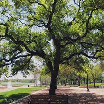 Tree in the Park von sherrys-camera