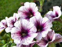 Watercolor Purple by sherrys-camera