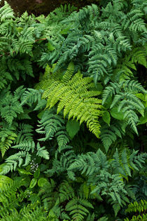 Fern Tapestry von Kathleen Bishop