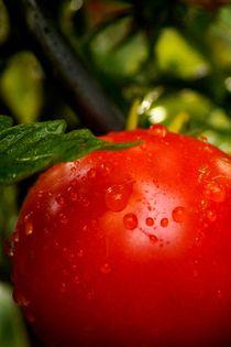 a little bit of water makes tomato smile - Ein wenig Wasser zaubert der Tomate ein lächelndes Gesicht by mateart