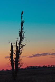 The Sentinel by Kathleen Bishop
