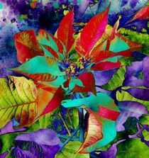 Christmas Poinsettia by Jamie Frier
