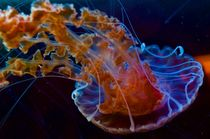 Blue Jellyfish von Ernesto Arias