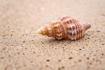 Shell on the beach von Pieter Tel
