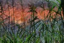 Reeds at sunset von dado