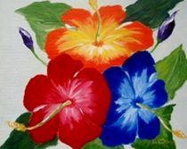 Darias-hibiscus