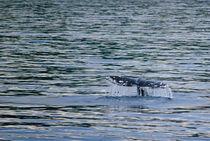 Whale Tail von agrofilms