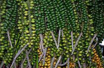 Green von Henrique Souto