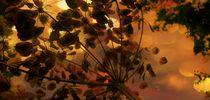 Seeds! von Heather Goodwin
