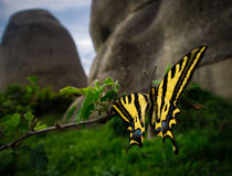Butterfly resting by Elias Lefas