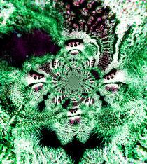 Phidippus green polar von Rainar Nitzsche