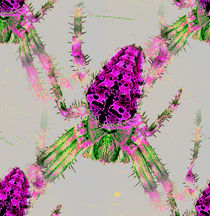 Cross spider pink green
