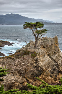 A Cypress Tree Vertical by agrofilms