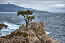 A Cypress Tree by agrofilms