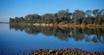 American River Shore von agrofilms