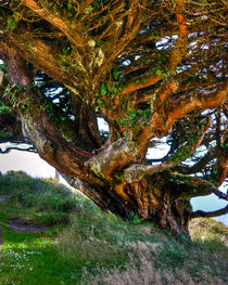An Upside Down Tree by agrofilms