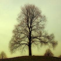 Baum by Violetta Honkisz