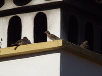 Chimney Sparrows... by Henrietta Benjamin