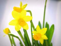 Frühling /Spring von Jeanine H