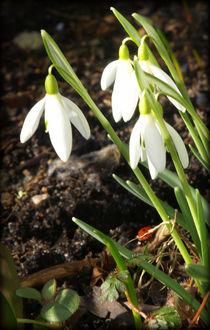 Frühling / Spring by Jeanine H