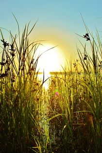 Tidligt om morgenen i Nordjylland von Michael Beilicke