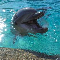 Ein Delfin als Freund by Chuya Shi