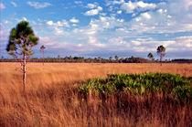 Open Prairie. Three Lakes Wildlife Management Area, Osceola County, Florida von chris kusik