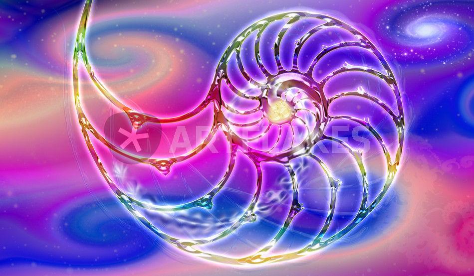 Nautilis Nautilus Shell The Golden Ratio Digital Art Art