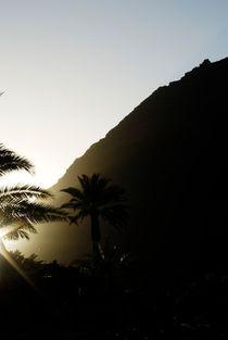 Palmen auf der Insel La Gomera von Marcus Krauß