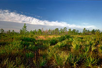 Cloud Line And Palmetto. Triple N Ranch, Osceola County FL von chris kusik