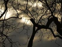 Eiche in der Abenddämmerung II von Elke Baschkar