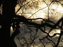 Eiche in der Abenddämmerung von Elke Baschkar