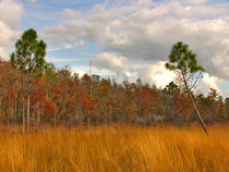 Fall Scene #2. Three Lakes Wildlife Management Area, Osceola County FL.. von chris kusik