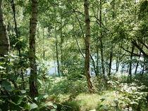 Waldsee  von Elke Baschkar
