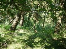 sonniger Sommertag im Wald  von Elke Baschkar