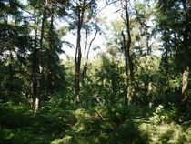 Sommertag im Wald  von Elke Baschkar