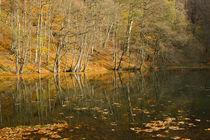 Lake by Evren Kalinbacak