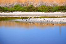 Birds On The River Bank von agrofilms
