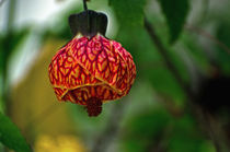 Floral Lantern by Jean Booth