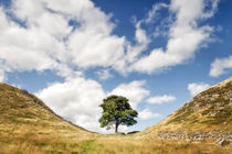 Sycamore Gap, Hadrian's Wall by Chris Frost