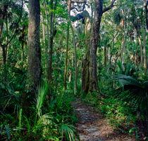 Path Through The Oaks. Highlands Hammock, Sebring FL. von chris kusik