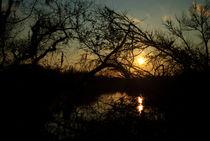 Branchy Sunset  von agrofilms